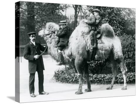 A Bactrian Camel Ride at London Zoo, C.1913-Frederick William Bond-Stretched Canvas Print