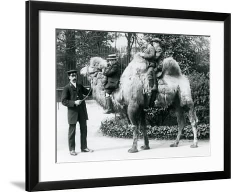 A Bactrian Camel Ride at London Zoo, C.1913-Frederick William Bond-Framed Art Print