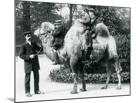 A Bactrian Camel Ride at London Zoo, C.1913-Frederick William Bond-Mounted Photographic Print
