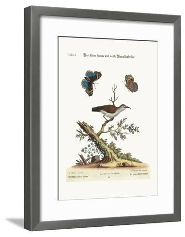 The Little Brown and White Creeper, 1749-73-George Edwards-Framed Art Print