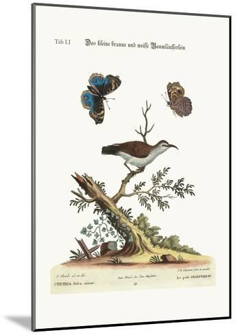 The Little Brown and White Creeper, 1749-73-George Edwards-Mounted Giclee Print