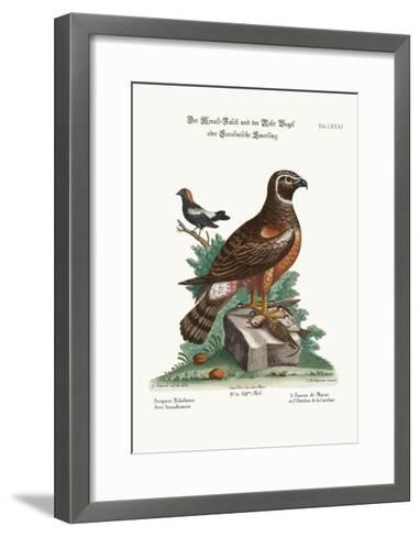 The Marsh-Hawk, and the Reed-Birds, 1749-73-George Edwards-Framed Art Print