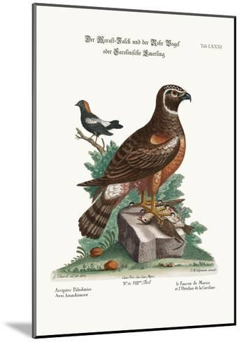 The Marsh-Hawk, and the Reed-Birds, 1749-73-George Edwards-Mounted Giclee Print