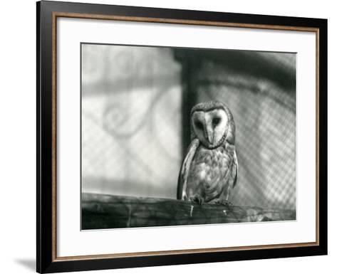 A Barn Owl at London Zoo, January 1922-Frederick William Bond-Framed Art Print