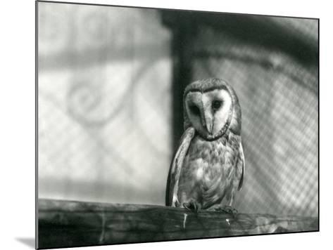 A Barn Owl at London Zoo, January 1922-Frederick William Bond-Mounted Photographic Print