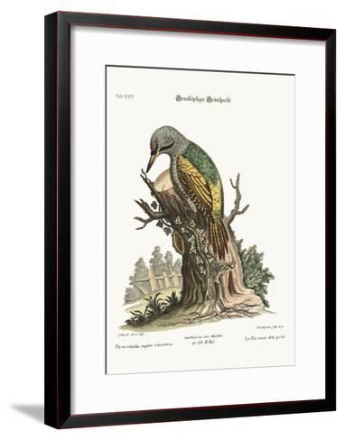 The Grey-Headed Green Woodpecker, 1749-73-George Edwards-Framed Art Print