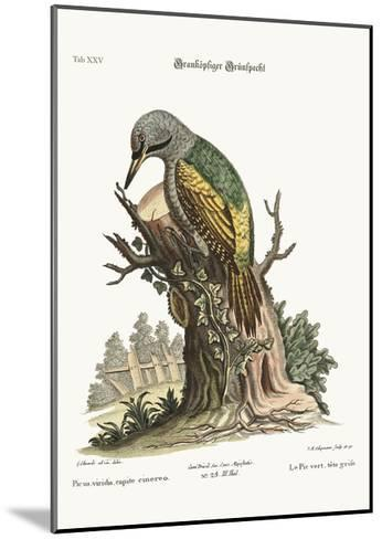 The Grey-Headed Green Woodpecker, 1749-73-George Edwards-Mounted Giclee Print