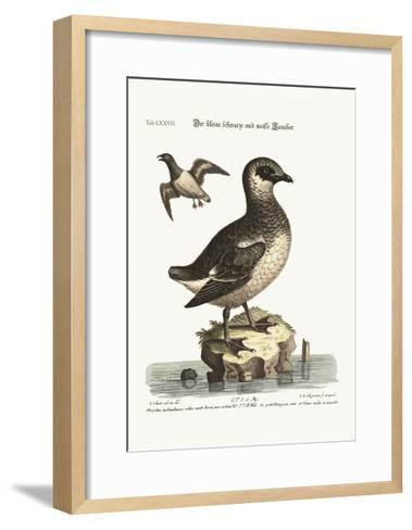 The Small Black and White Divers, 1749-73-George Edwards-Framed Art Print