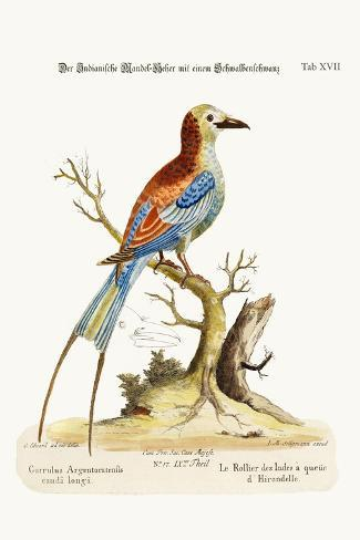 The Swallow-Tailed Indian Roller, 1749-73-George Edwards-Stretched Canvas Print