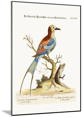 The Swallow-Tailed Indian Roller, 1749-73-George Edwards-Mounted Giclee Print