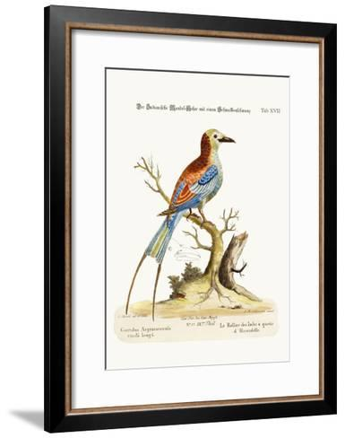 The Swallow-Tailed Indian Roller, 1749-73-George Edwards-Framed Art Print