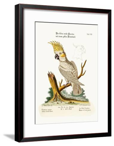 The Lesser White Cockatoo with a Yellow Crest, 1749-73-George Edwards-Framed Art Print