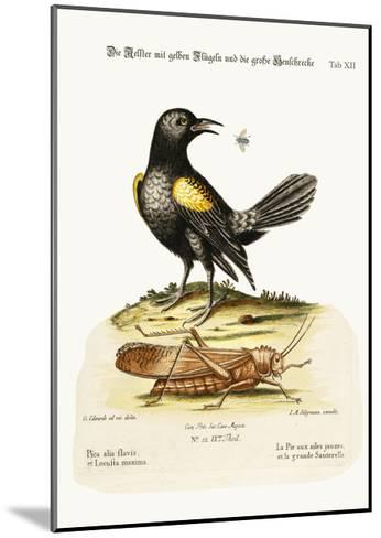 The Yellow-Winged Pye, and Greatest Locust, 1749-73-George Edwards-Mounted Giclee Print