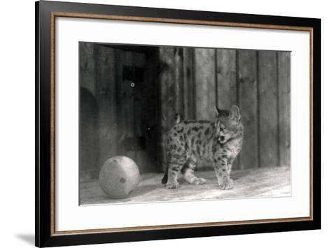 Leopard Cub with a Ball-Frederick William Bond-Framed Art Print