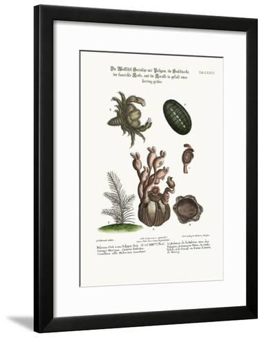 The Balanus of the Whale with Polypes-George Edwards-Framed Art Print