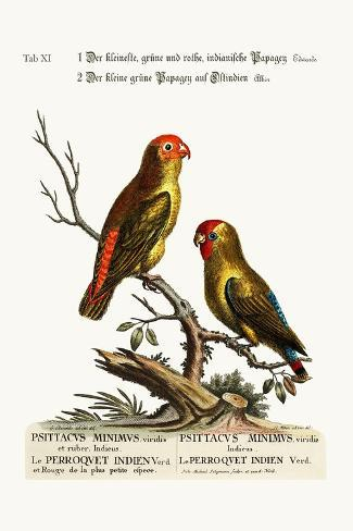 The Smallest Green and Red Indian Paroquet. the Small Green Parrot of East India, 1749-73-George Edwards-Stretched Canvas Print