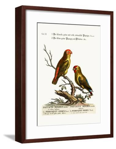 The Smallest Green and Red Indian Paroquet. the Small Green Parrot of East India, 1749-73-George Edwards-Framed Art Print