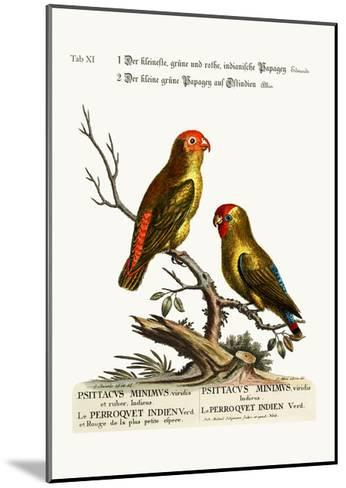 The Smallest Green and Red Indian Paroquet. the Small Green Parrot of East India, 1749-73-George Edwards-Mounted Giclee Print
