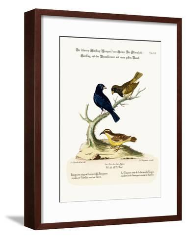 The Black Linnet, the Olive-Coloured Linnet, and the Yellow-Bellied Creeper, 1749-73-George Edwards-Framed Art Print