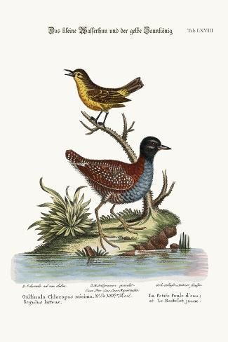 The Least Water-Hen, and the Yellow Wren, 1749-73-George Edwards-Stretched Canvas Print