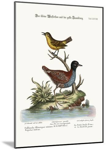 The Least Water-Hen, and the Yellow Wren, 1749-73-George Edwards-Mounted Giclee Print