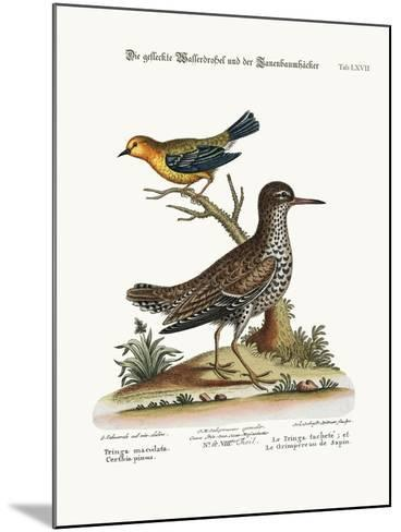 The Spotted Tringa, and the Pine-Creeper, 1749-73-George Edwards-Mounted Giclee Print