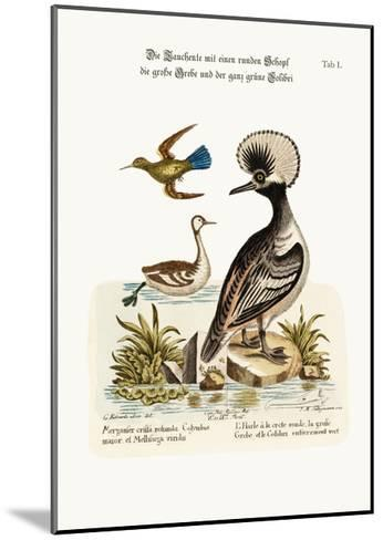 The Round-Crested Duck, the Greater Dobchick, and the All-Green Hummingbird, 1749-73-George Edwards-Mounted Giclee Print