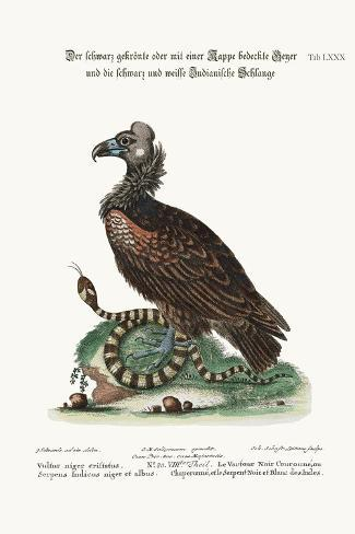 The Crested or Coped Black Vulture, and the Black and White Indian Snake, 1749-73-George Edwards-Stretched Canvas Print