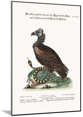 The Crested or Coped Black Vulture, and the Black and White Indian Snake, 1749-73-George Edwards-Mounted Giclee Print