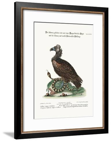 The Crested or Coped Black Vulture, and the Black and White Indian Snake, 1749-73-George Edwards-Framed Art Print