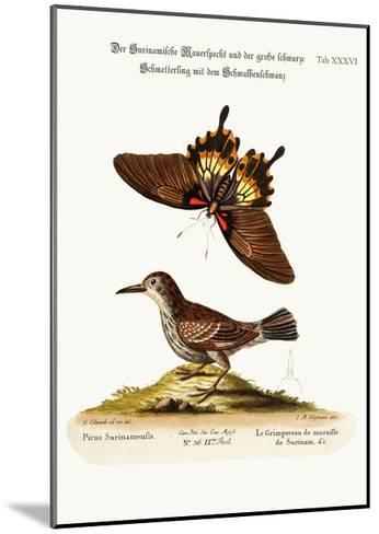 The Wall-Creeper of Surinam and the Great Dusky Swallow-Tailed Butterfly, 1749-73-George Edwards-Mounted Giclee Print