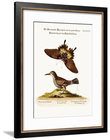 The Wall-Creeper of Surinam and the Great Dusky Swallow-Tailed Butterfly, 1749-73-George Edwards-Framed Art Print