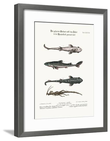 The Prickled Dog or Hound-Fish, with an Insect Called the Walking-Stick, 1749-73-George Edwards-Framed Art Print