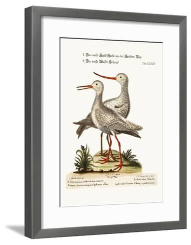 The White Godwit from Hudson's Bay. the White Red-Shank or Pool-Snipe, 1749-73-George Edwards-Framed Art Print