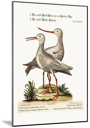 The White Godwit from Hudson's Bay. the White Red-Shank or Pool-Snipe, 1749-73-George Edwards-Mounted Giclee Print
