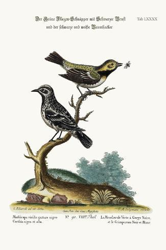 The Black-Throated Green Flycatcher, and the Black and White Creeper, 1749-73-George Edwards-Stretched Canvas Print