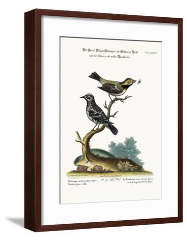 The Black-Throated Green Flycatcher, and the Black and White Creeper, 1749-73-George Edwards-Framed Art Print