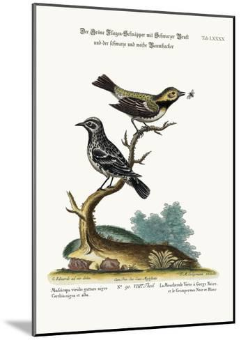 The Black-Throated Green Flycatcher, and the Black and White Creeper, 1749-73-George Edwards-Mounted Giclee Print