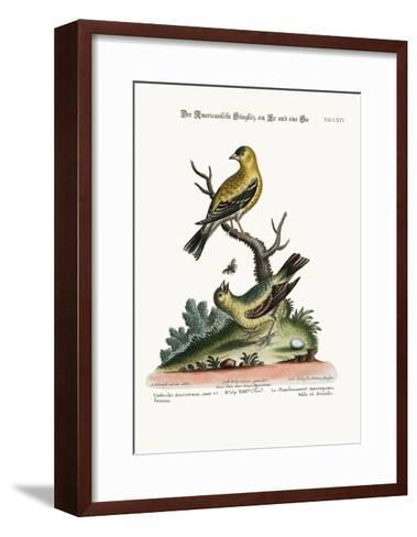 The American Goldfinch, Cock and Hen, 1749-73-George Edwards-Framed Art Print
