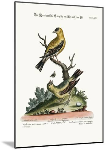 The American Goldfinch, Cock and Hen, 1749-73-George Edwards-Mounted Giclee Print