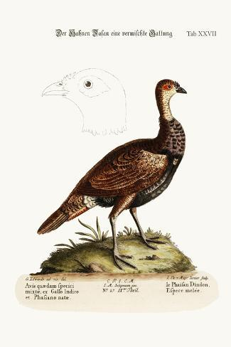 The Turkey-Pheasant, a Mixed Species, 1749-73-George Edwards-Stretched Canvas Print