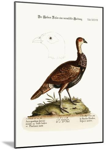 The Turkey-Pheasant, a Mixed Species, 1749-73-George Edwards-Mounted Giclee Print
