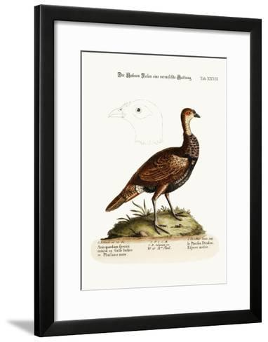 The Turkey-Pheasant, a Mixed Species, 1749-73-George Edwards-Framed Art Print