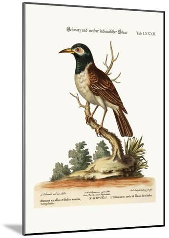 The Black and White Indian Starling, 1749-73-George Edwards-Mounted Giclee Print