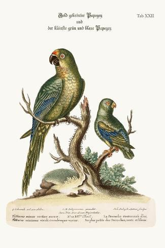 The Golden-Crowned Parrakeet and the Least Green and Blue Parrakeet, 1749-73-George Edwards-Stretched Canvas Print