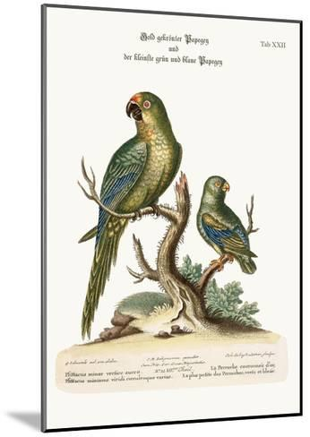 The Golden-Crowned Parrakeet and the Least Green and Blue Parrakeet, 1749-73-George Edwards-Mounted Giclee Print