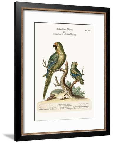 The Golden-Crowned Parrakeet and the Least Green and Blue Parrakeet, 1749-73-George Edwards-Framed Art Print
