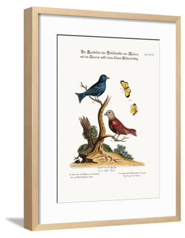 The Malacca Gros-Beak, the Jacarini, and the Small Yellow Butterfly, 1749-73-George Edwards-Framed Art Print