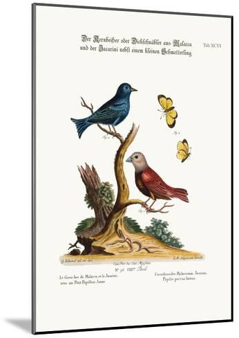 The Malacca Gros-Beak, the Jacarini, and the Small Yellow Butterfly, 1749-73-George Edwards-Mounted Giclee Print