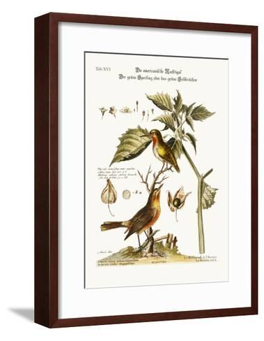 The American Nightingale. the Green Sparrow or Green Hummingbird, 1749-73-George Edwards-Framed Art Print